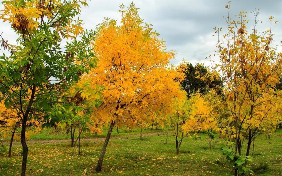 Odessa - mùa Thu trong công viên